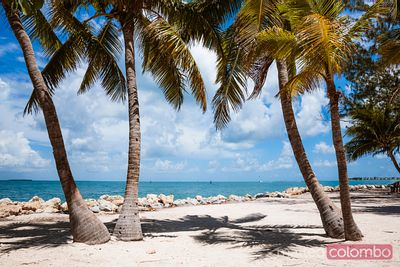 Palm trees and sandy beach, Key West, Florida, USA