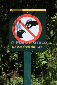 Do Not Feed The Kea warning sign (Nestor notabilis), The Chasm car park, Te Anau to Milford Highway, Milford Sound, Southland...