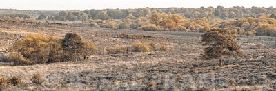 Panorama of New Forest