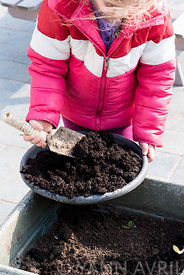 Semis de Haricots d'Espagne par une fillette dans un jardin ∞ Sowing of scarlet runner by a little girl in a garden