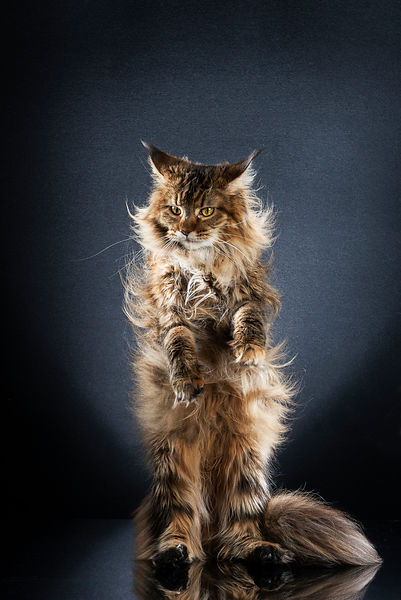 STANDING CATS - NYX