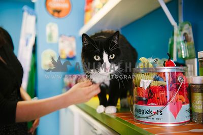 A black and white shop cat next to a display of cat toys and catnip