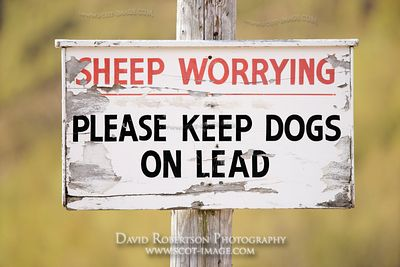 Image - Sign. Sheep worrying, Please keep dogs on lead