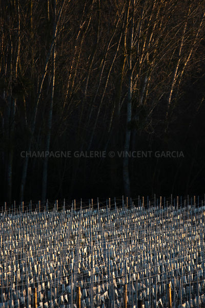 Champagne-Galerie-abstract-vignes-bois-5481