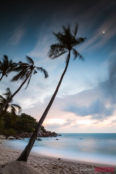 Palm tree on tropical beach at dawn, Ko Samui, Thailand