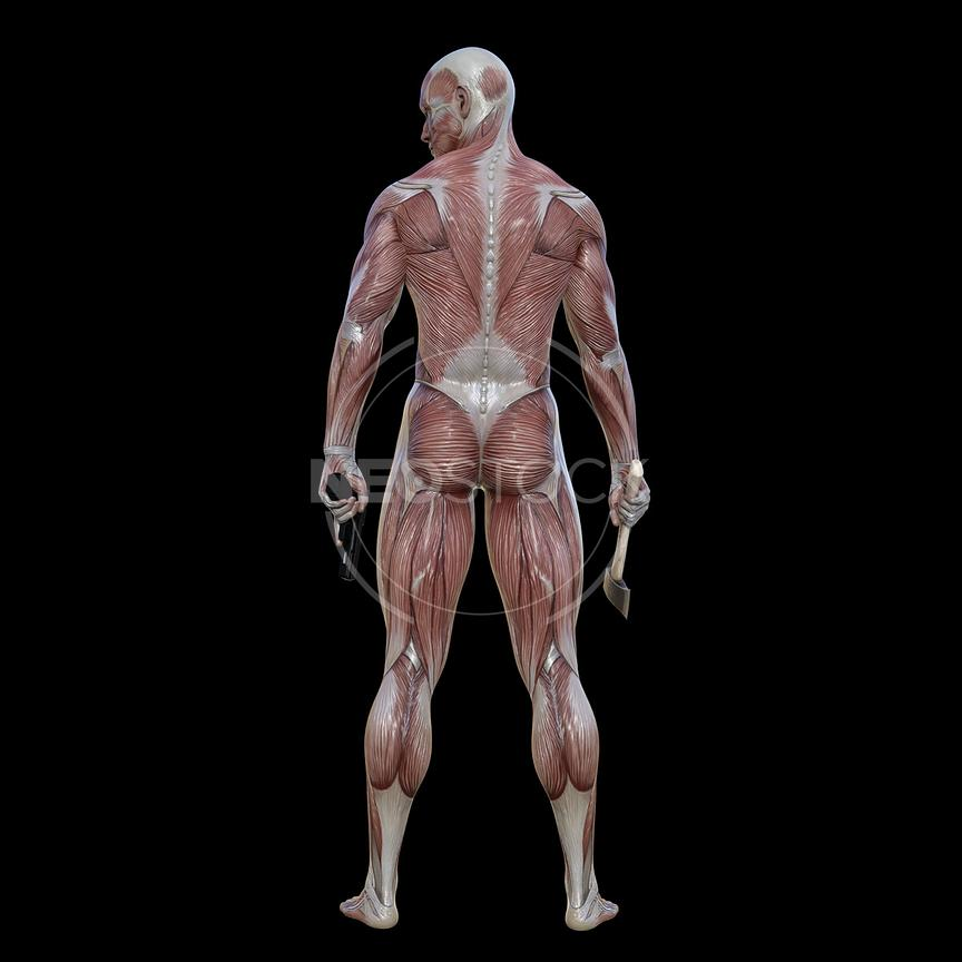 cg-body-pack-male-muscle-map-neostock-16