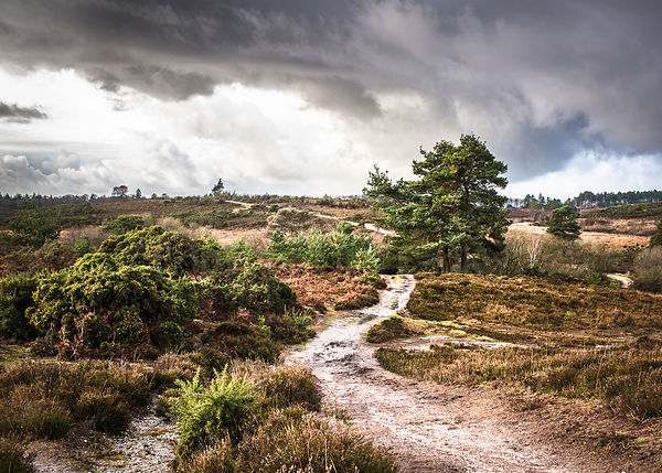 Dark clouds over the New Forest National Park,