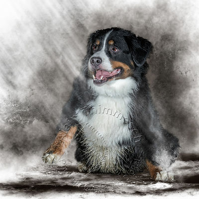 2020-Art-Digital-Alain-Thimmesch-Chien-39