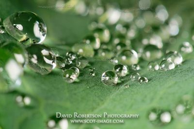Image - Dew drops on cabbage leaf