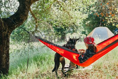 A black dog trying to join her mom in a hammock at a campground