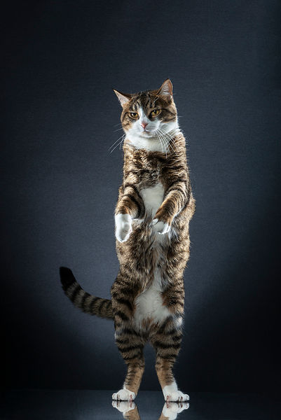 STANDING CATS -  AJ
