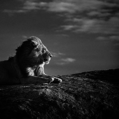 5243-Lion en son royaume, Tanzania 2007 © Laurent Baheux