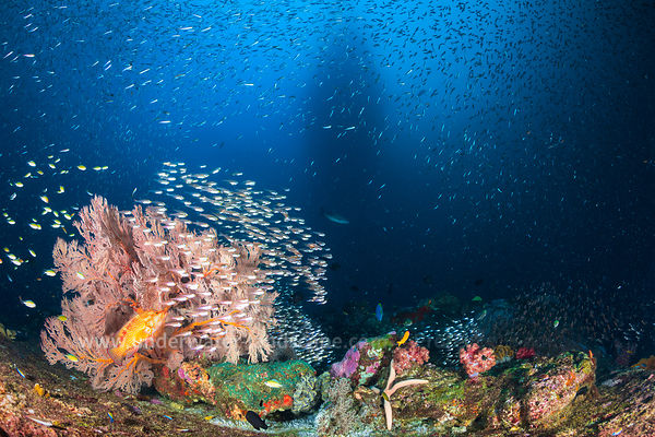 Underwater view of Koh tachai