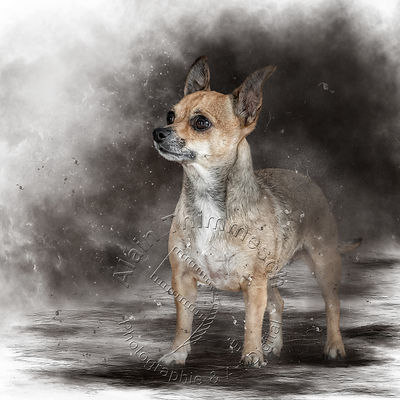 Art-Digital-Alain-Thimmesch-Chien-983