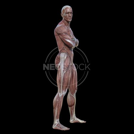 cg-body-pack-male-muscle-map-neostock-2