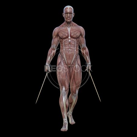 cg-body-pack-male-muscle-map-neostock-10
