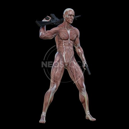 cg-body-pack-male-muscle-map-neostock-12