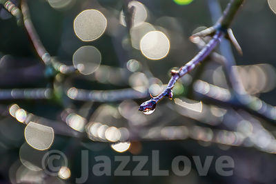 Raindrop on the end of twig.