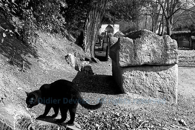 "Black cat in ""Les Alyscamps"", a Roman necropolis in Arles"