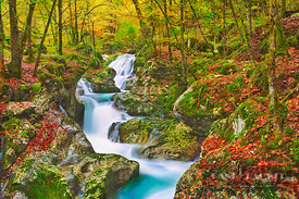 Mountain brook with waterfall in beech forest - Europe, Slovenia, Primorska, Soca, Lepena, Sunikov Vodni Gaj (Alps, Julian Al...