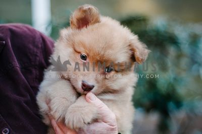 A young fluffy puppy being held outside