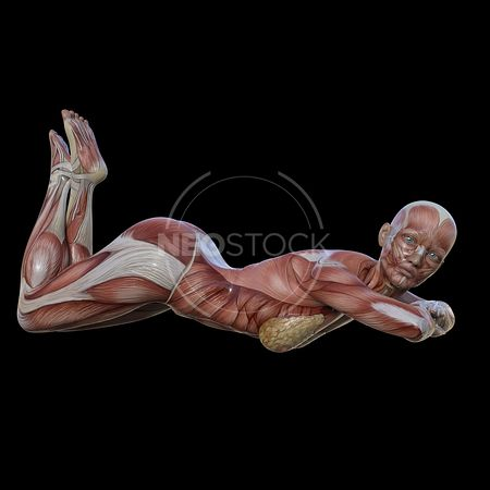 cg-body-pack-female-muscle-map-neostock-37