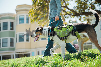 A woman walking a large dog in a Ruffwear backpack in the neighborhood