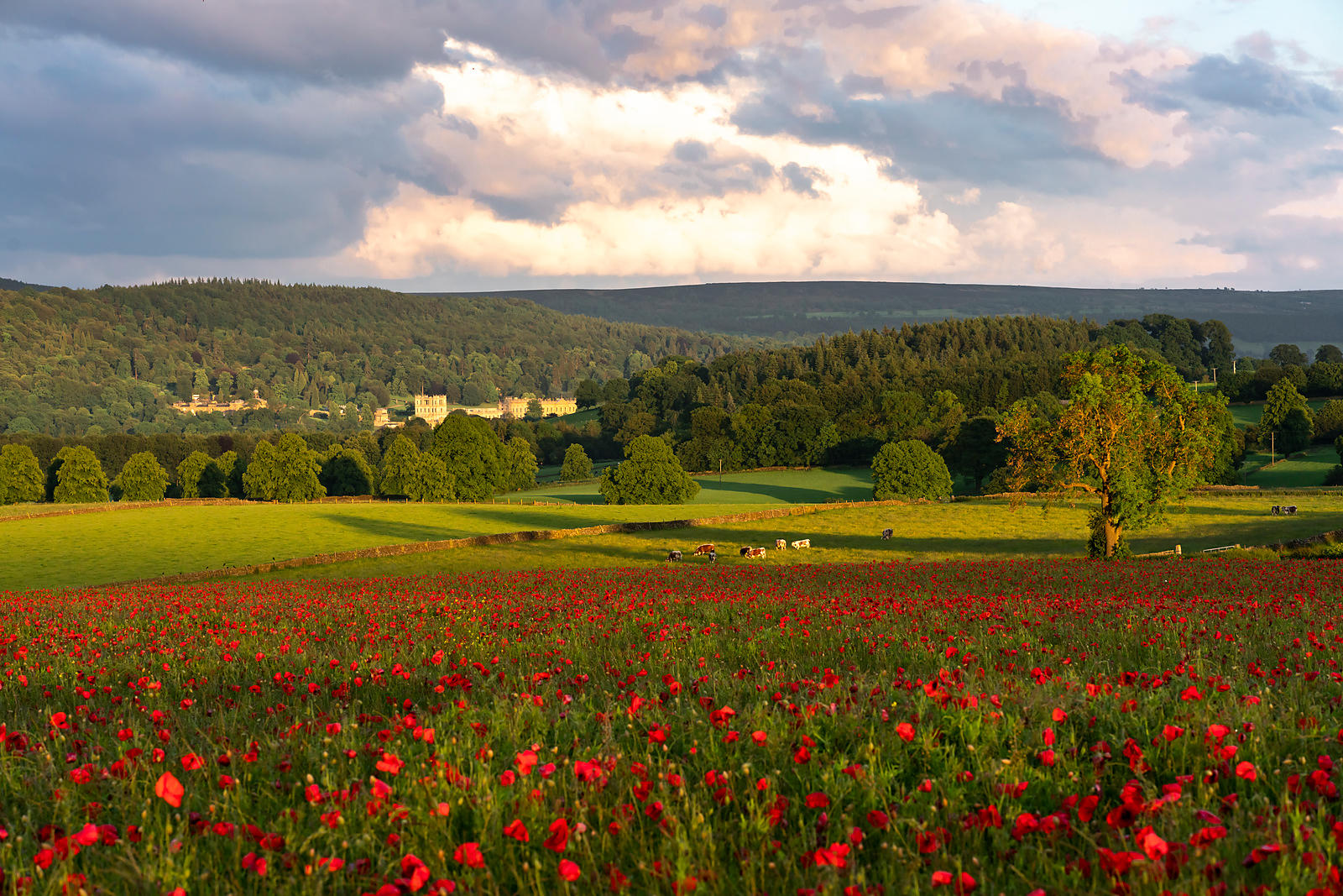 Chatsworth and the poppy field