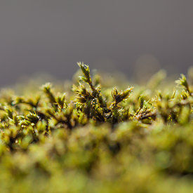 Macro_moss_and_plants_Iceland_emm.is-5