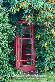 Image - Old broken and overgrown telephone box.