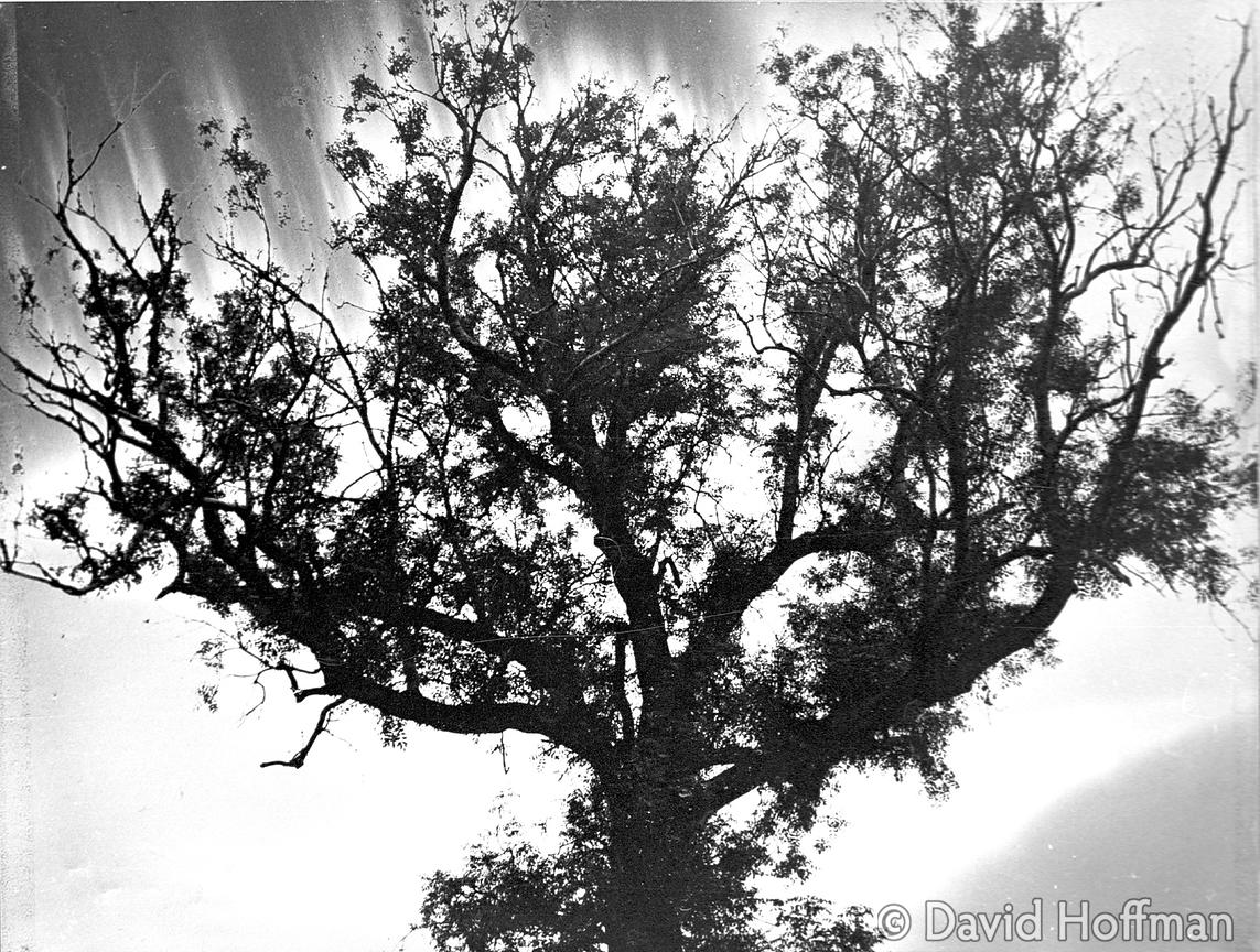 Solarised picture of tree at University of York