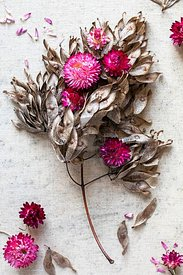 Strawflowers