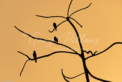 3 Bird silhouette at sunrise