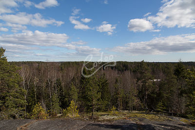 View of forest at Kaitalampi Finland