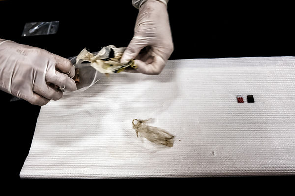 Lara Olvieri, extracts from a bag some finds, including some banknotes; on the table, two SIM cards. Archeologist and forensi...