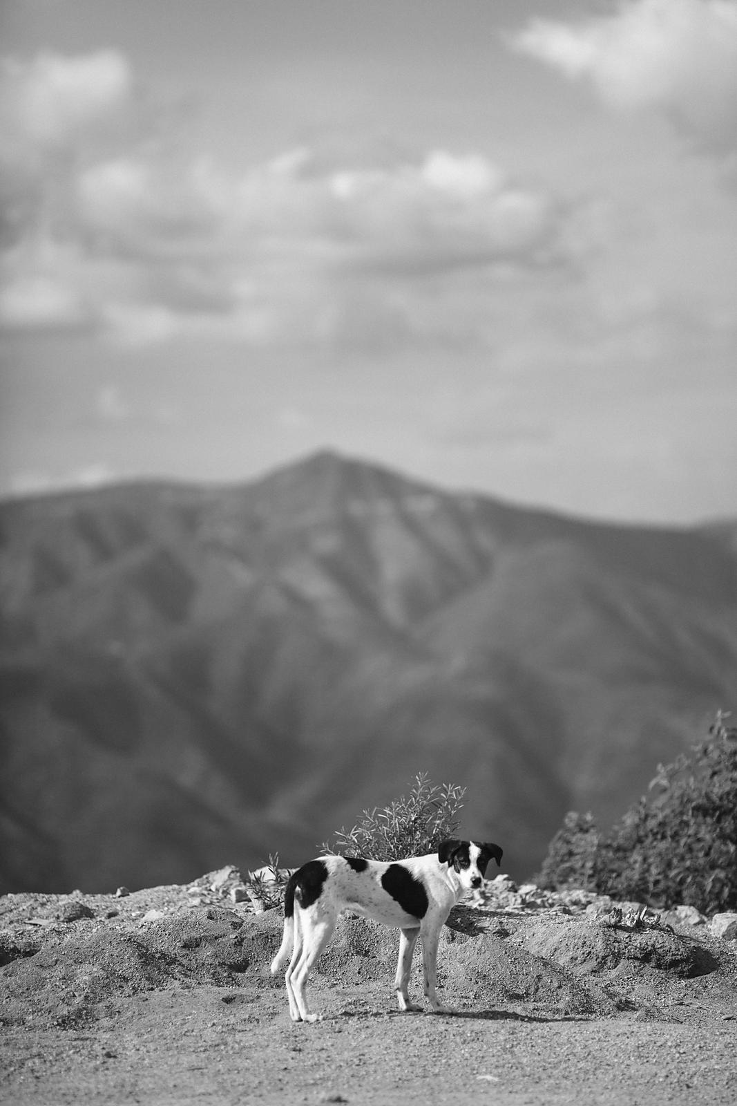 A dog in Oaxaca