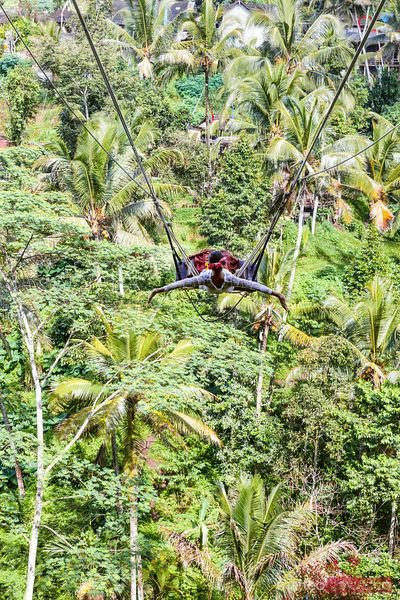 Woman on a swing over forest, Ubud, Bali, Indonesia