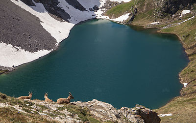 MMM_-_2020_-_Grand_lac_-_Petit_Bouquetin_12_copie