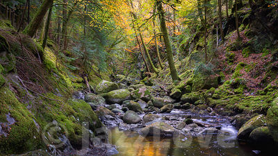 Stream in autumn coloured forest.