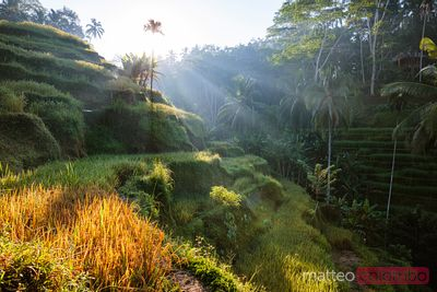 Sunrise at Tegallalang rice terraces, Bali, Indonesia