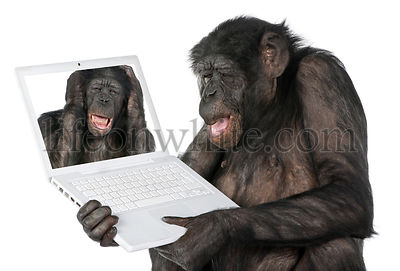 monkey looking at a computer screen