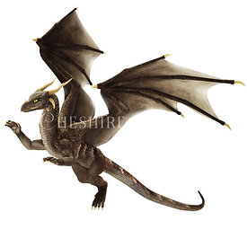 Grey Brown Dragon