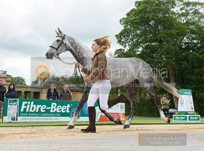 Constance Copestake and EL KOLIBRI at the trot up, Equitrek Bramham Horse Trials 2019