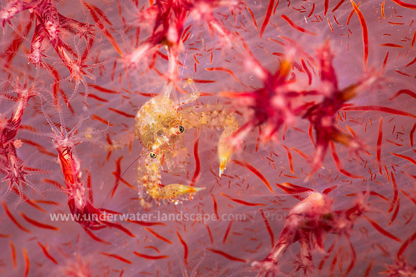 On the soft coral
