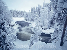 Kitkajoki River in Oulanka National Park near Kuusamo Finland winter