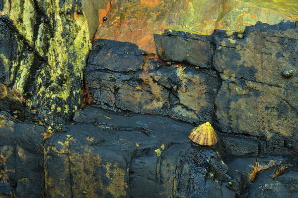 Limpet On The Rocks I