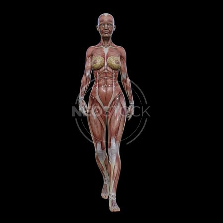 cg-body-pack-female-muscle-map-neostock-10