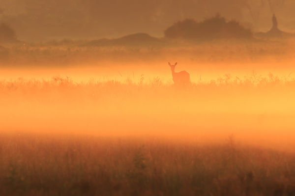 Red Lechwe Sunrise II