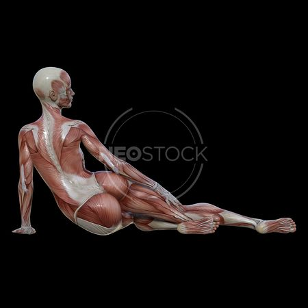 cg-body-pack-female-muscle-map-neostock-24