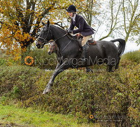 Willa Newton jumping a hedge near Sandpit Lane - Belvoir Hunt Opening Meet 2/11